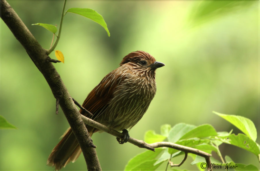 Bird around Soulitude